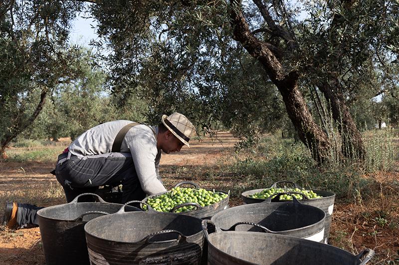 Euroliva - olive expert